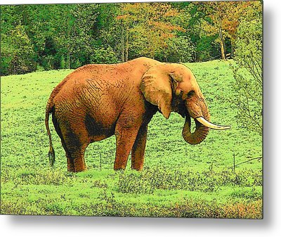 Metal Print featuring the photograph Elephant by Rodney Lee Williams