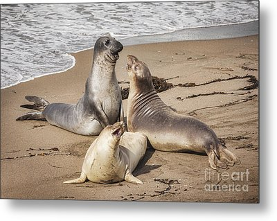 Elephant Seals Metal Print by Colin and Linda McKie