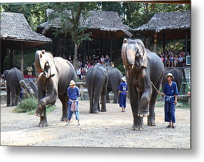 Elephant Show - Maesa Elephant Camp - Chiang Mai Thailand - 011310 Metal Print by DC Photographer