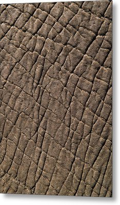 Elephant Skin, Zimbabwe Metal Print by Pete Oxford