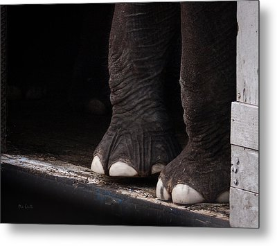 Metal Print featuring the photograph Elephant Toes by Bob Orsillo