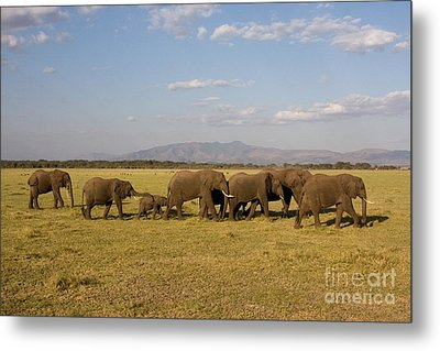 Metal Print featuring the photograph Elephants At Lake Manyara by Chris Scroggins