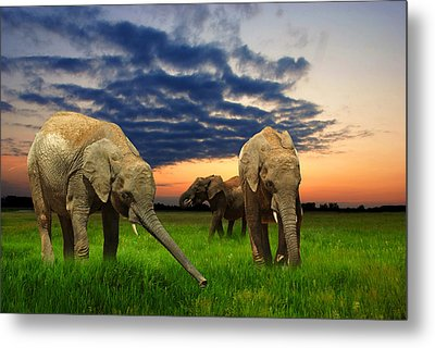 Elephants At Sunset Metal Print by Jaroslaw Grudzinski