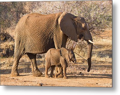 Elephants Big And Small Metal Print