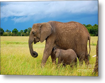 Elephants In Masai Mara Metal Print by Charuhas Images