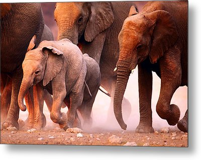Elephants Stampede Metal Print