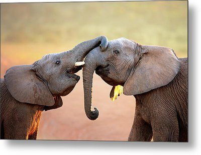 Elephants Touching Each Other Metal Print