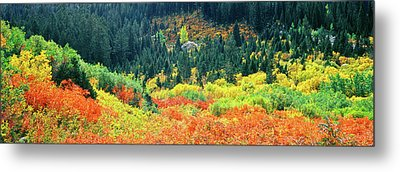 Elevated View Of Autumn Trees, Cascade Metal Print