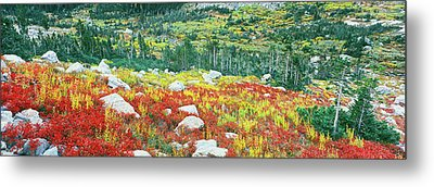 Elevated View Of Autumn Trees, North Metal Print