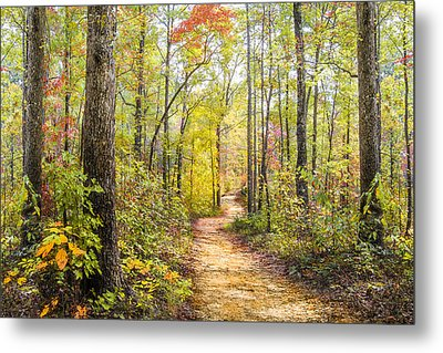 Elfin Forest Metal Print by Debra and Dave Vanderlaan