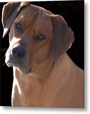 Metal Print featuring the photograph Eli by Mim White