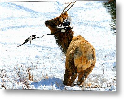Elk And Magpie  Metal Print by Rebecca Adams