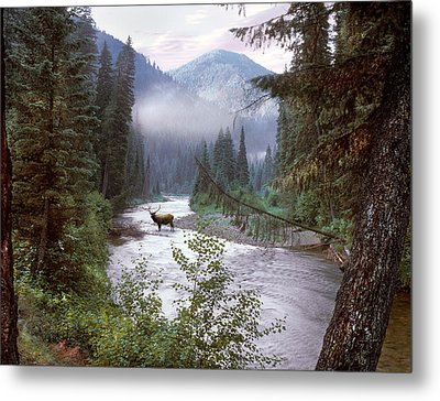 Elk Crossing 2 Metal Print by Leland D Howard