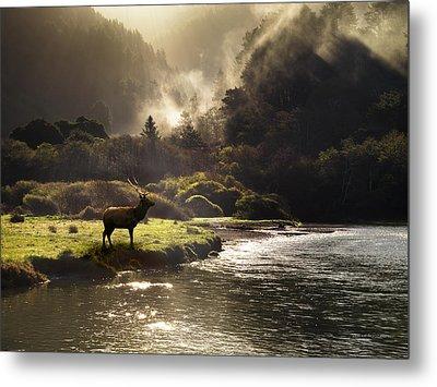 Elk In Sinkyone Wilderness Metal Print