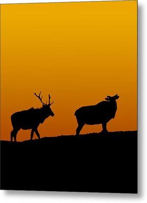Elk In The Sunset Metal Print