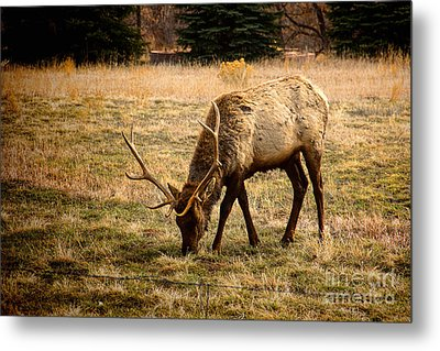 Elkin John Metal Print by Jon Burch Photography
