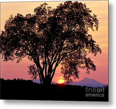 Metal Print featuring the photograph Elm At Sunset by Alan L Graham