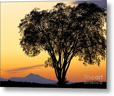 Elm At Twilight Metal Print by Alan L Graham