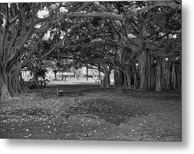 Embraced By Trees Metal Print by Douglas Barnard