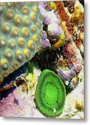 Emerald Artichoke Coral Metal Print by Amy McDaniel
