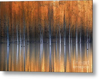 Emerging Beauties Reflected Metal Print by Marco Crupi