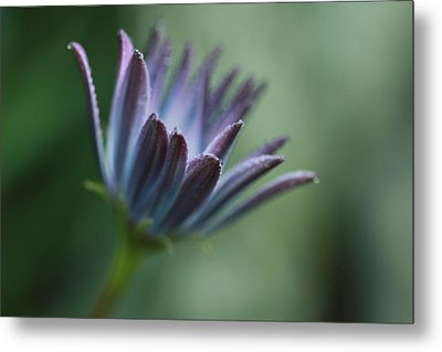 Emerging Metal Print by Debbie Howden