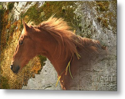 Emerging Free Metal Print by Michelle Twohig
