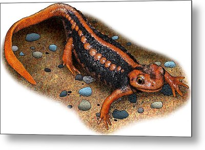 Emperor Newt Metal Print by Roger Hall