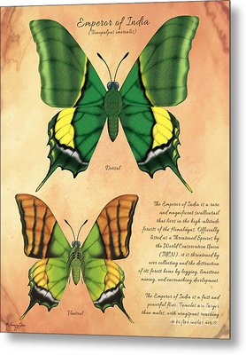 Emperor Of India Butterfly Metal Print by Tammy Yee