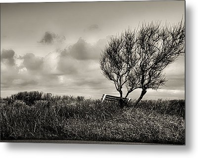 Empty Bench Naked Trees Metal Print