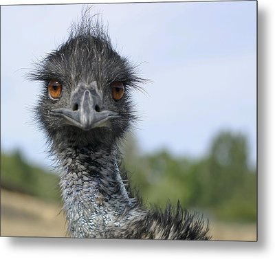Emu Gaze Metal Print by Belinda Greb