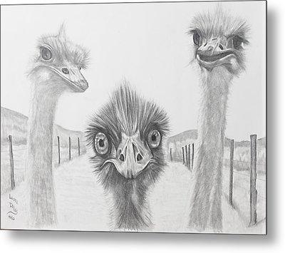 Emu Gossip Metal Print by Laura Dallas