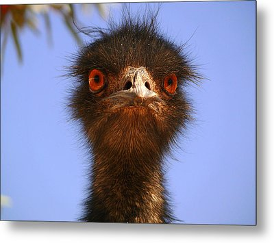 Emu Upfront Metal Print by Evelyn Tambour