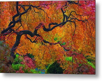 Enchanted Canopy Metal Print by Patricia Babbitt