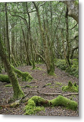 Metal Print featuring the photograph Enchanted Forest by Hugh Smith