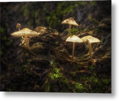 Enchanted Forest Metal Print by Scott Norris