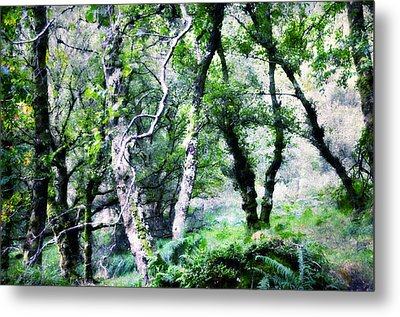 Enchanted Forest. The Kingdom Of Thetrees. Glendalough. Ireland Metal Print by Jenny Rainbow