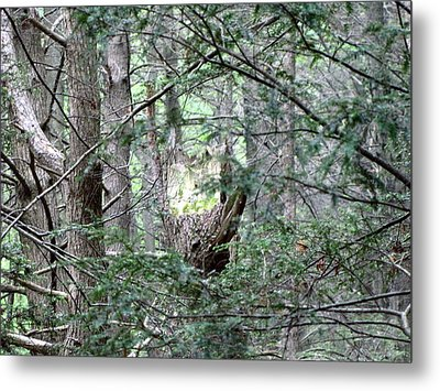 Enchanted Metal Print by Melissa Stoudt