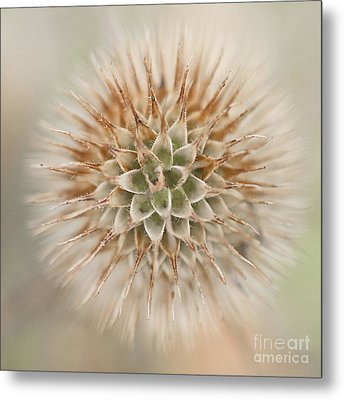 Enchanted Thistle Metal Print