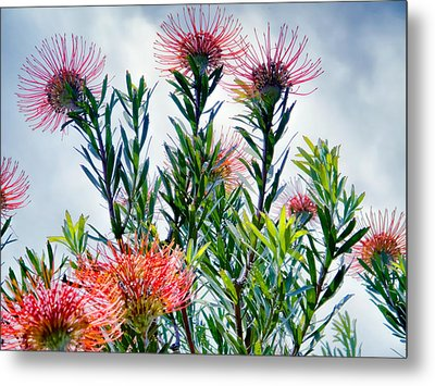 Enchanting Gardens 42 Metal Print