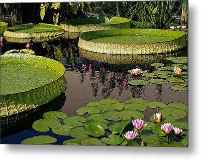 Enchanting Water Garden Metal Print by Byron Varvarigos