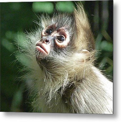 Enchanting Young Spider Monkey Metal Print