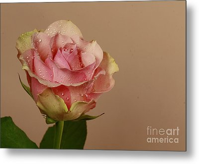 Enchantment Metal Print by Inspired Nature Photography Fine Art Photography