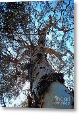 Encinitas Eucalyptus Metal Print