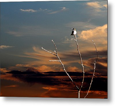 Metal Print featuring the photograph End Of The Day by John Freidenberg