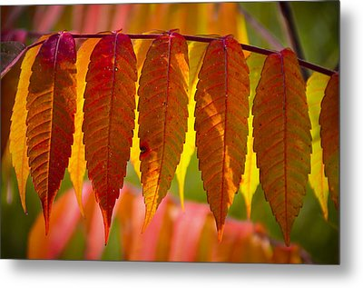 Ending With Fire Metal Print