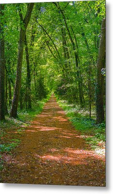 Endless Trail Into The Forest Metal Print by Nila Newsom
