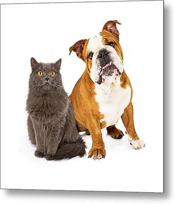English Bulldog And Gray Cat Metal Print by Susan Schmitz
