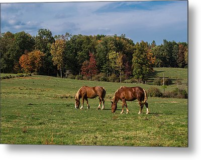 Enjoying The Colors Metal Print by Anthony Thomas