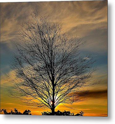 Metal Print featuring the photograph Enlightenment by Kathy King